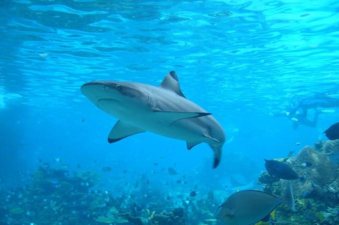Фото: guardianlv.com