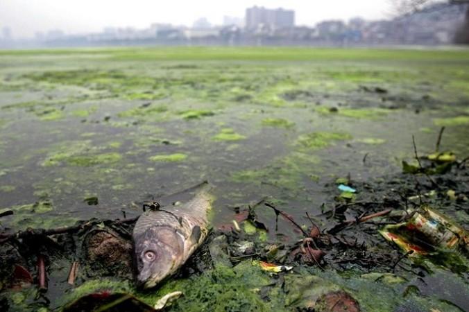 В Китае загрязнена почти половина наземных вод. Фото с epochtimes.com