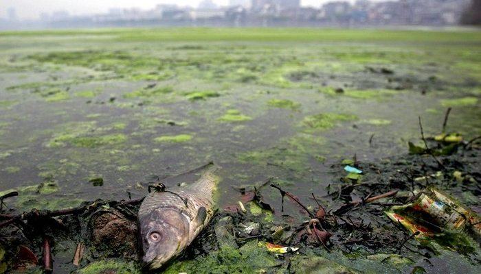 Отчёт: В Китае загрязнена почти половина наземных вод