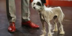 В Берлине собакам позволили посетить музей (видео)