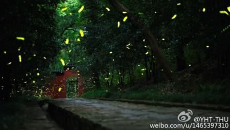 Firefly-Nanjing-Linggu-Temple-10-600x341
