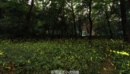 Firefly-Nanjing-Linggu-Temple-9-600x343