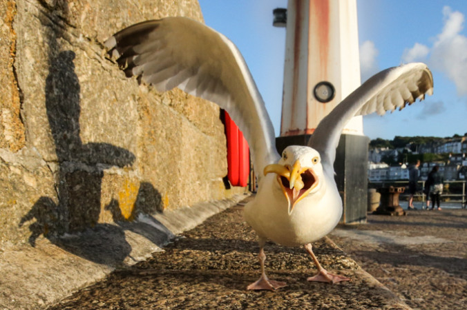 птицы, Великобритания, чайки, фото дня