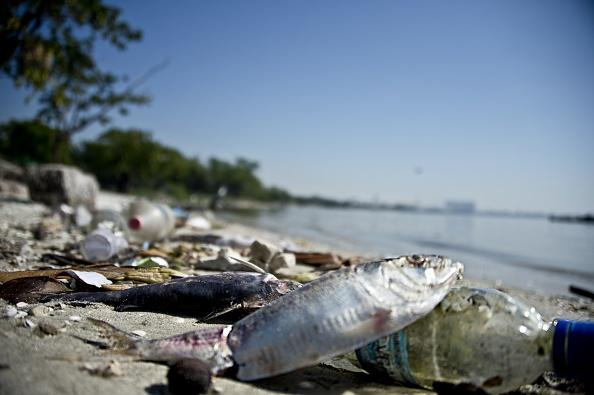 Рио-де-Жанейро, Гуанабара, мусор, экологичные лодки, Олимпиада
