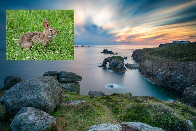 Закат в Конце земли, Корнуолл. Фото: Shutterstock* Сверху слева: кролик. Фото: ForestWander via Wikimedia Commons