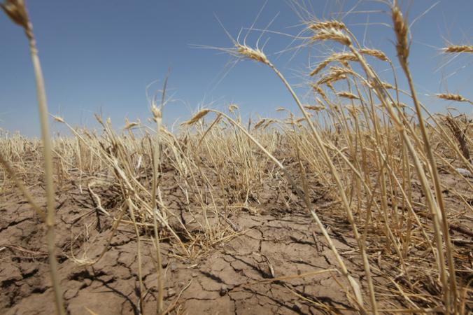Волгоградская область, режим ЧС, засуха, страда, ущерб