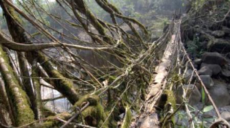3_Root_Bridge_India-600x336