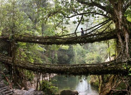6_Root_Bridge_India-600x435