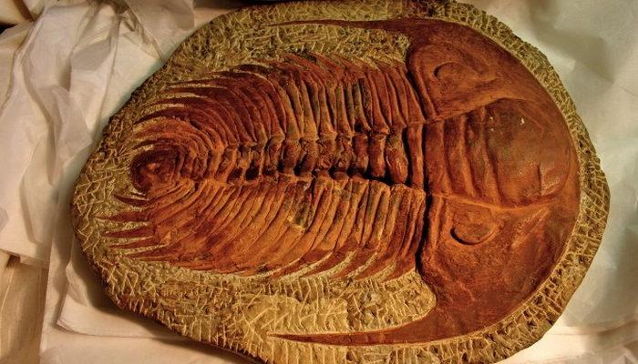 5 странных окаменелостей взволновали учёных
