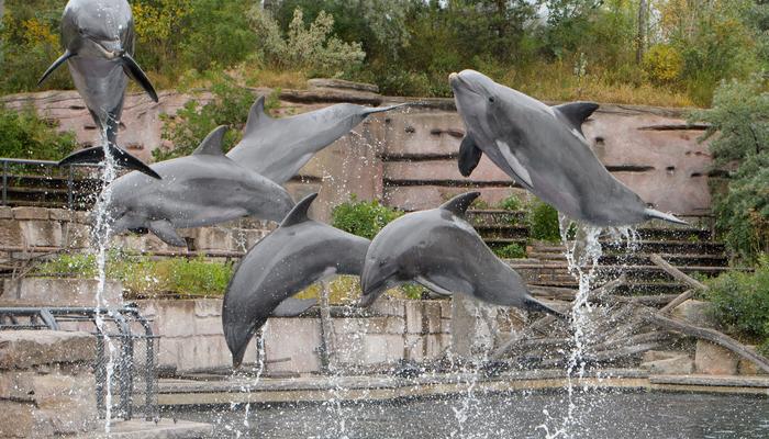 На побережье Фукусимы от воздействия радиации гибнут дельфины