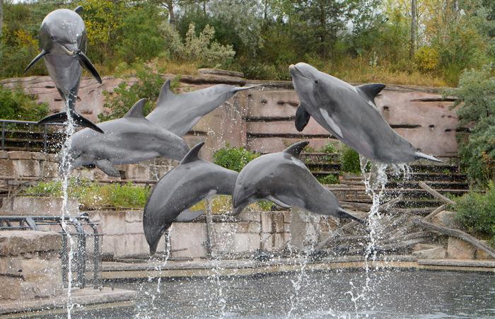 Фукусима, дельфины, радиация