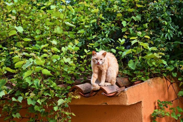 Крайне редкая песчаная кошка родила трёх котят в израильском сафари-парке (фото)
