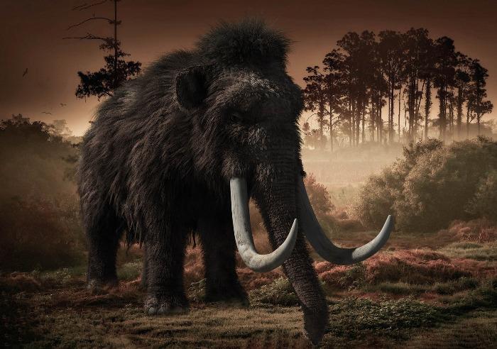 Российские учёные обнаружили одно из последних мест обитания мамонтов