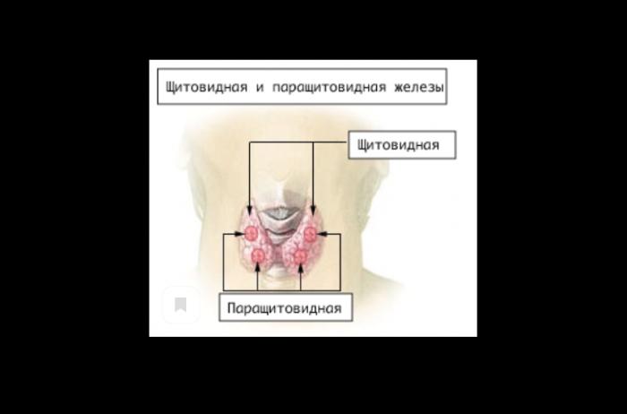 Как помочь щитовидной железе? Советы для людей с гипотиреозом