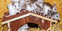 Учёные смогли отключить мышам ген ожирения
