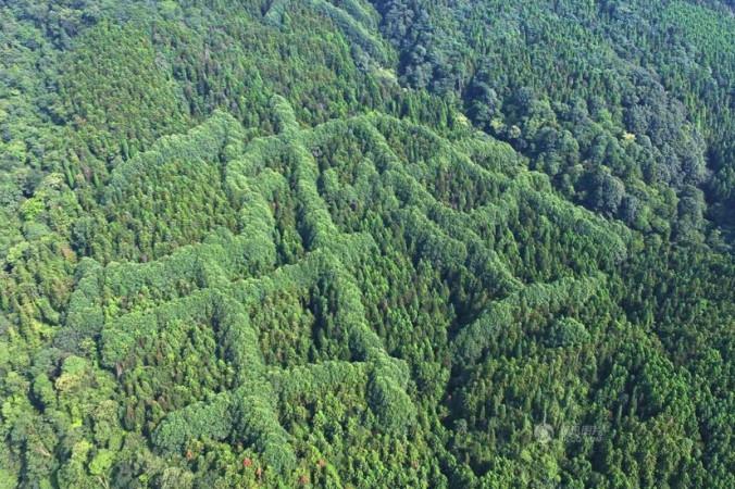 Огромный китайский иероглиф на вершине зелёного леса. Фото: Tencent.com