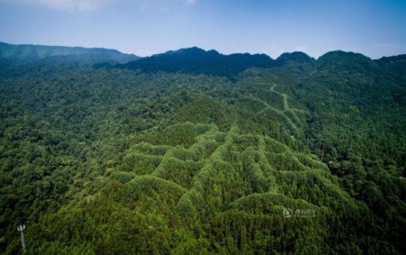 mysterious-pattern-forest-China-2-600x377