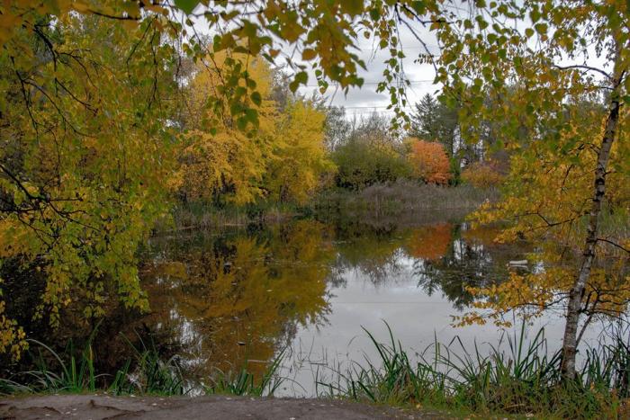 пруд, озеро