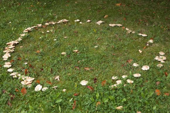 Ведьмин круг на траве. Эти кольца считаются входом в другое измерение, опасной областью