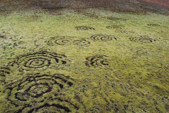 Ведьмины круги во мху в Исландии