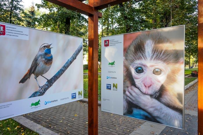 Фотовыставка «Природа смотрит на тебя» открылась в центре Москвы. Фото: Ульяна Ким/Великая Эпоха