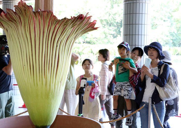 YOSHIKAZU TSUNO/Getty Images