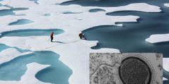 Учёные исследуют древний мега-вирус, который может распространиться из-за потепления климата
