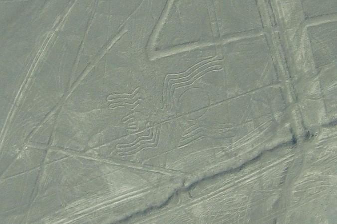 Паук в долине Наска. Фото: Zigomar/wikipedia.org