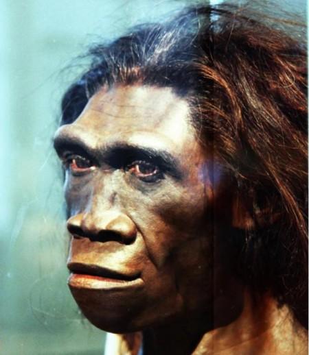adult-female-Homo-erectus