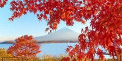 Чем заняться осенью? Прогуляйтесь в парке