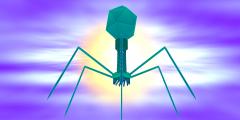 Бактериофаги — будущее медицины