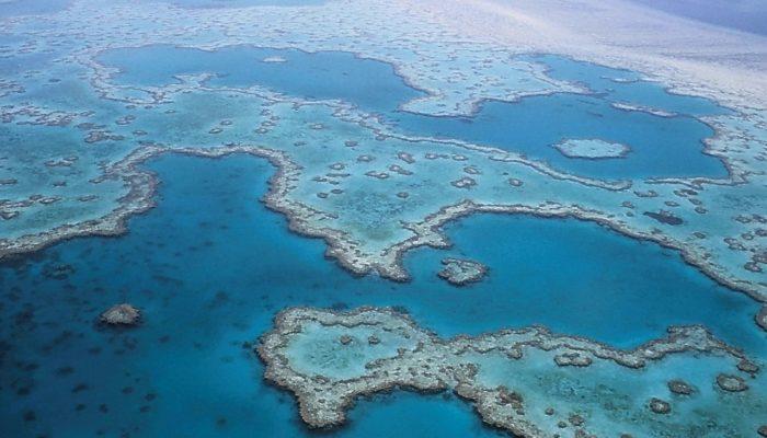 Большой Барьерный риф погибает