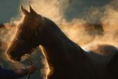 лошади, скачки, Австралия, Мельбурн, фото дня