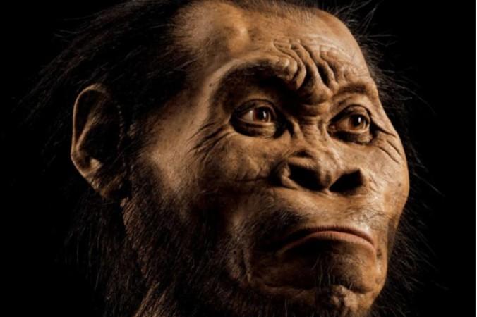 Реконструкция головы Homo naledi сделана Джоном Гурч, он потратил на это около 700 часов. Фото: Mark Thiessen/National Geographic