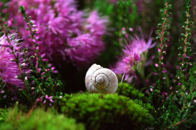 Фото: pixabay.com/CC0 Public Domain