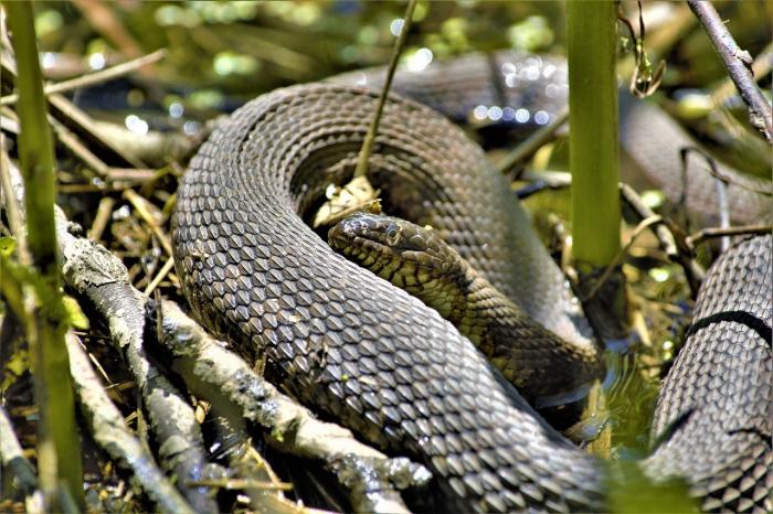 «Врачи без границ» прогнозируют рост смертности от укусов змей
