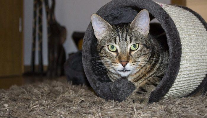 Службе котов — хранителей Эрмитажа исполнилось 270 лет (видео)