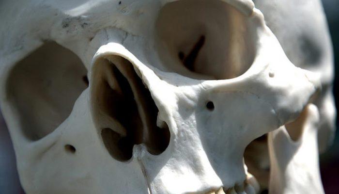 Гигантские скелеты, найденные в Эквадоре, отправлены на экспертизу