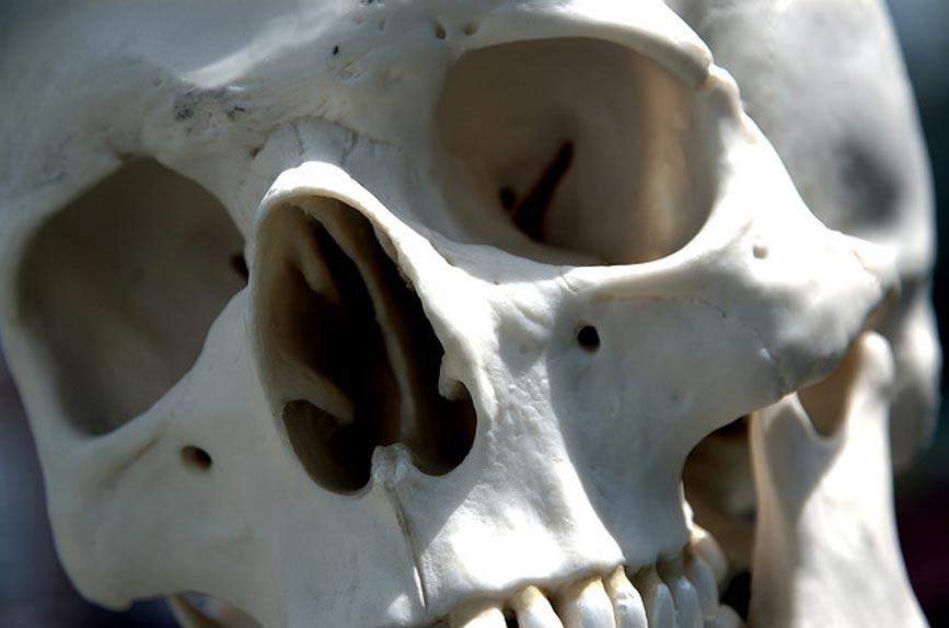 Человеческий череп. Фото: Стив Снодграсс/CC BY 2.0