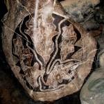 Гравировка на древних камнях-валунах возрастом примерно 30 тыс.лет. Фото: Brattarb/commons.wikimedia.org/CC BY-SA 3.0