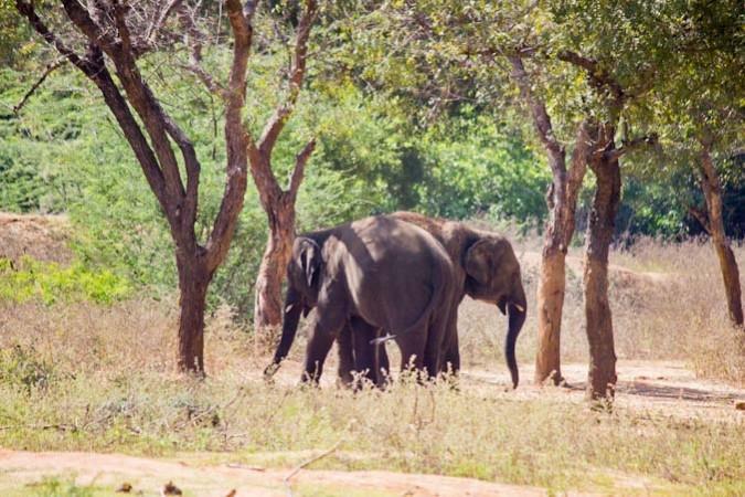 Без слонов ландшафт изменится навсегда. Фото: Великая Эпоха