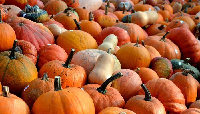 Как питаться осенью в соответствии с наукой о пяти элементах