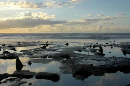submerged-prehistoric-forest-at-Borth-Beach