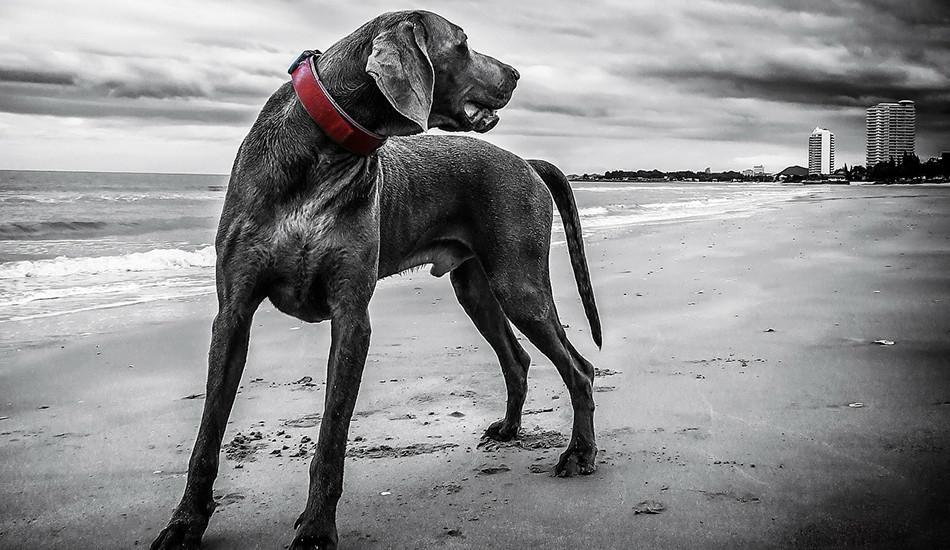 В ходе нового исследования было протестировано ДНК 5000 собак со всего мира, и результаты указывают на Центральную Азию. Фото: Pixabay/CC0 Public Domain