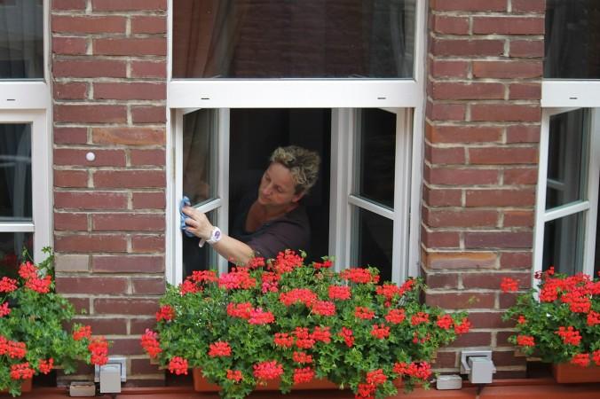 окно, стена, цветы