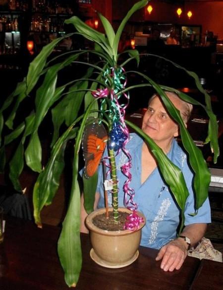 Клив Бакстер проводит эксперименты с растением драцена. Фото: Cleve Backster