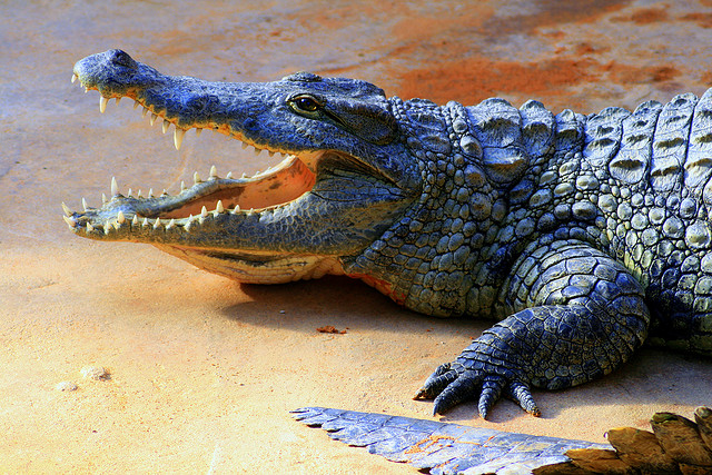 http://www.visiontimes.com/2015/11/16/indonesia-plans-to-use-crocodiles-as-prison-guards.html
