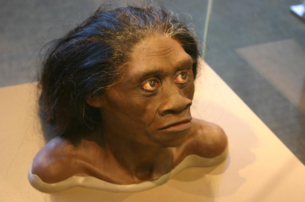 Предположительный вид Homo floresiensis. Фото: Фото: Ryan Somma/flickr.com/CC BY-SA 2.0