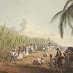 Рабы трудятся на плантации сахарного тростника. Остров Антигуа (1823). Фото: Wikimedia Commons