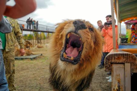 Парк львов Тайган. Фото: Алла Лавриненко/Великая Эпоха